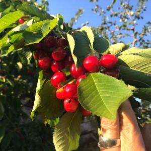 frutta 02